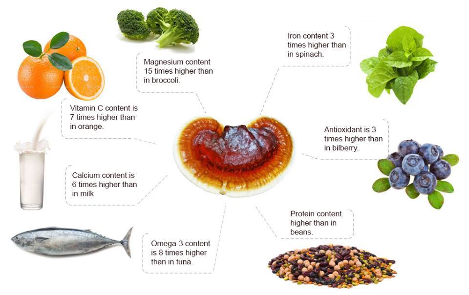 Ganoderma is Good for You